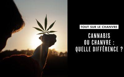 Cannabis ou chanvre : quelle différence ?