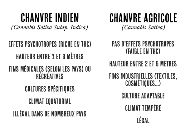 difference chanvre et cannabis